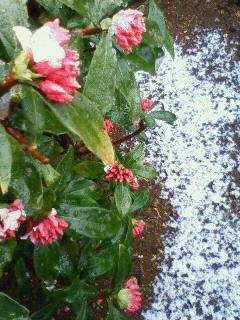 虫も引っ込む春の雪